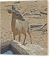 Deer At Waterhole Wood Print