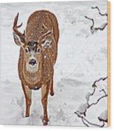 Deer Buck In Snow Wood Print
