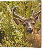 Deer Buck In Velvet Wood Print