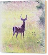 Deer - Buck - White-tailed Wood Print