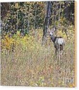 Deer Camoflauged Wood Print
