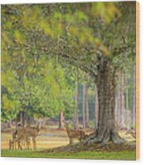 Deer Crossing Wood Print