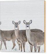 Deer Deer Deer Wood Print