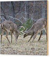 Deer Discussion E167 Wood Print