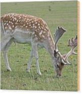 Deer Eating Wood Print