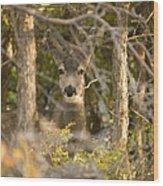Deer Frame Wood Print