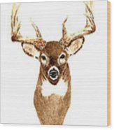 Deer - Front View Wood Print