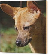 Deer-head Chihuahua Wood Print