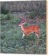 Deer-img-0113-001 Wood Print