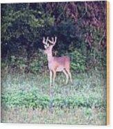 Deer-img-0122-7 Wood Print