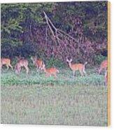 Deer-img-0128-005 Wood Print