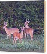 Deer-img-0150-001 Wood Print