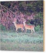 Deer-img-0151-003 Wood Print