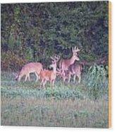 Deer-img-0158-001 Wood Print