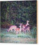 Deer-img-0158-003 Wood Print