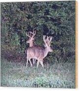 Deer-img-0177-001 Wood Print