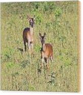 Deer-img-0283-001 Wood Print