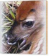Deer-img-0349-002 Wood Print