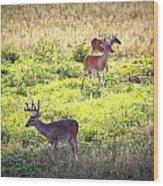 Deer-img-0437-001 Wood Print