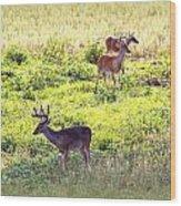 Deer - 0437-004 Wood Print