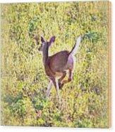 Deer-img-0456-001 Wood Print