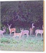Deer-img-0470-002 Wood Print