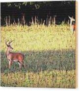Deer-img-0627-001 Wood Print