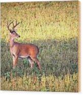 Deer-img-0627-002 Wood Print