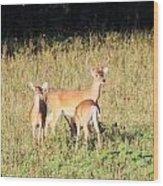Deer-img-0642-001 Wood Print