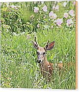 Deer In Magee Marsh Wood Print