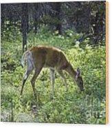 Deer In Sunlight Glen Wood Print