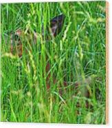 Deer In Tall Grass Wood Print