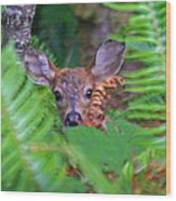 Fawn In The Ferns Wood Print