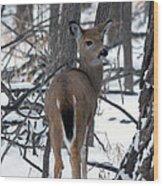 Deer In The Grove Wood Print