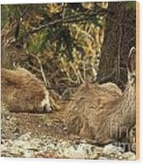 Deer In The Rockies Wood Print