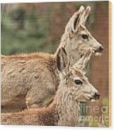 Deer In The Rocky Mountains Wood Print