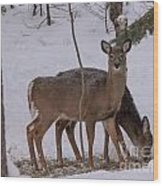 Deer In The Trees Wood Print