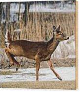 Deer Jump Wood Print