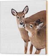 Deer Kisses Wood Print