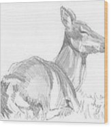 Deer Lying Down Drawing Wood Print