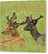 Deer Lying In A Field Wood Print by DerekTXFactor Creative
