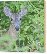 Deer Me Wood Print by Joe McCormack Jr