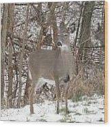 Deer Of Beauty  Wood Print