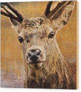 Deer On Canvas Wood Print