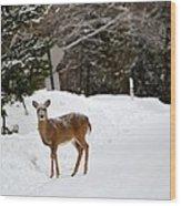 Deer On Side Of Road Wood Print