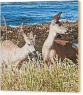 Deer On The Beach At Point Lobos Ca Wood Print