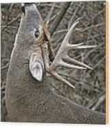 Deer Pictures 444 Wood Print
