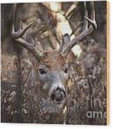 Deer Pictures 449 Wood Print