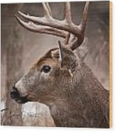 Deer Pictures 491 Wood Print
