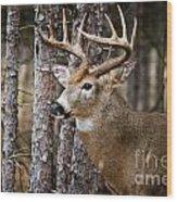 Deer Pictures 508 Wood Print